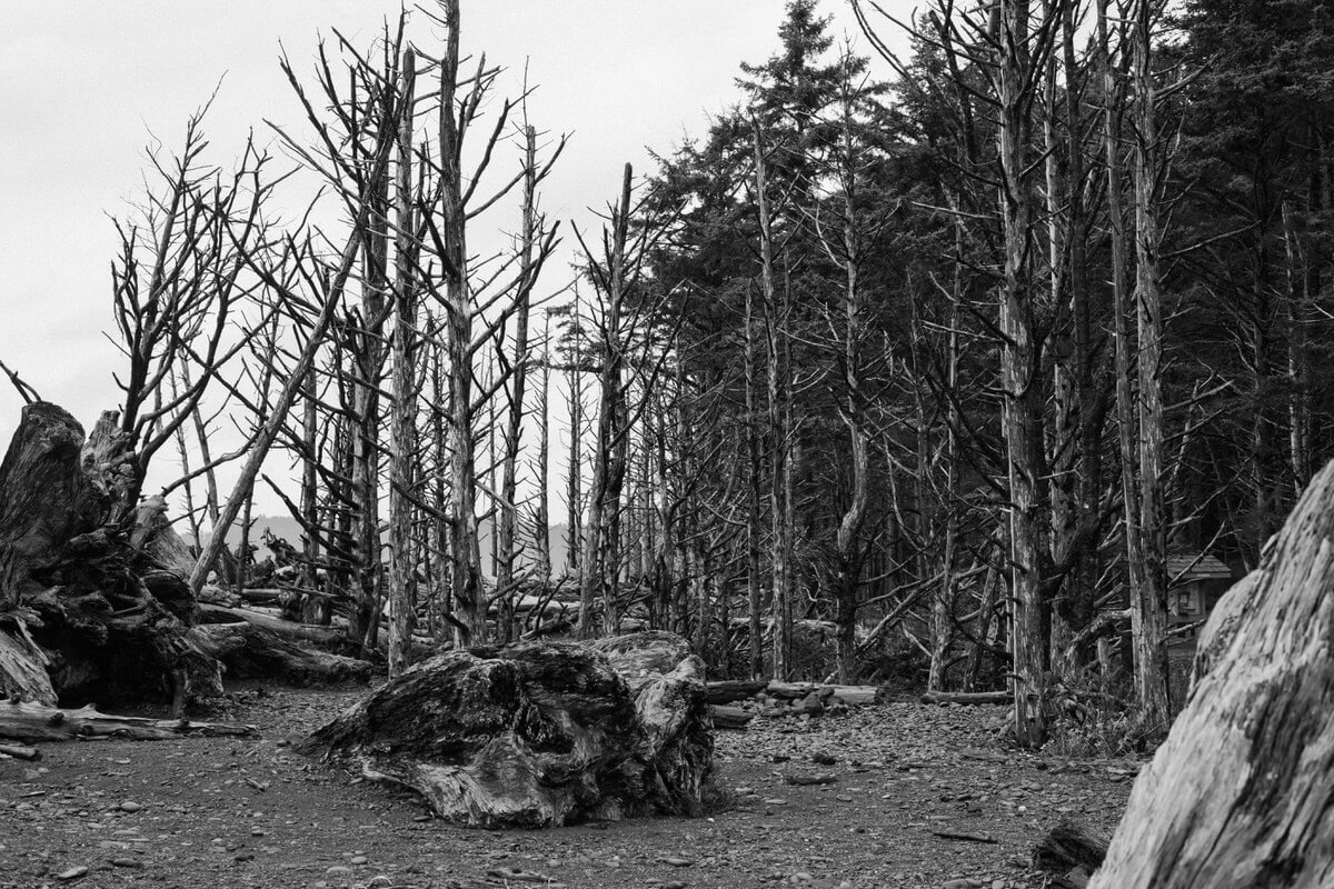 Olympic-National-Park-Washington-black-and-white-fine-art-photography-by-Studio-L-photographer-Laura-Schneider-_9107