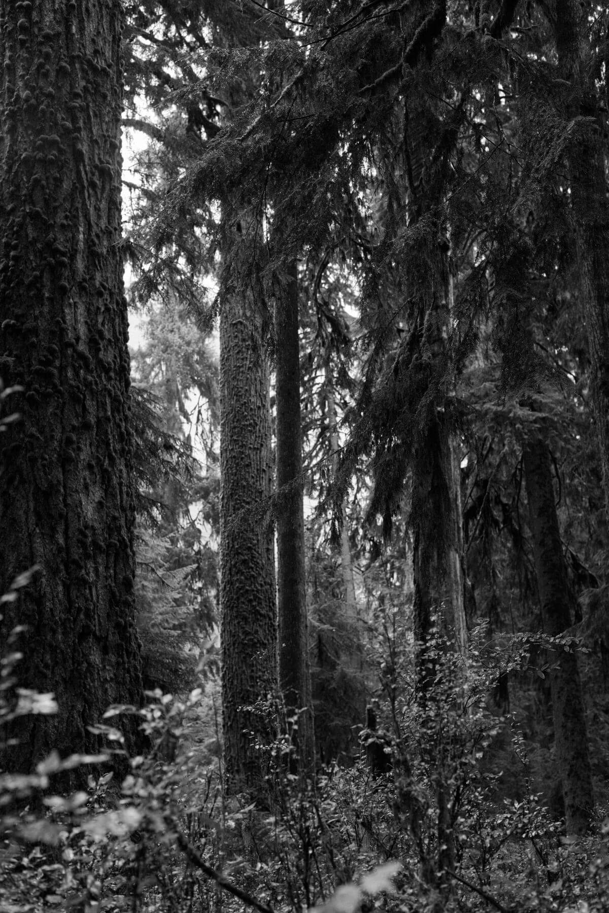 Olympic-National-Park-Washington-black-and-white-fine-art-photography-by-Studio-L-photographer-Laura-Schneider-_9174