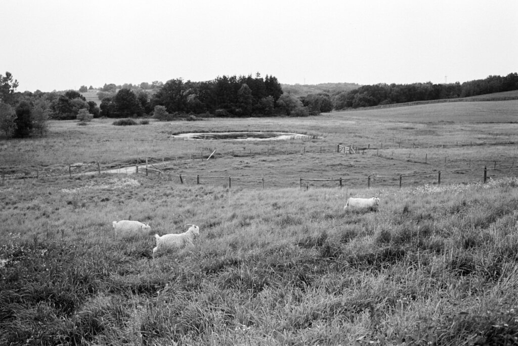 Cristo-Rey-Ranch-Wisconsin-black-and-white-fine-art-film-photography-by-Studio-L-photographer-Laura-Schneider-_0029