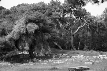Trees of Epidaurus Greece