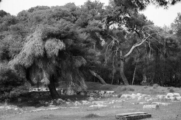 Trees of Epidaurus Greece