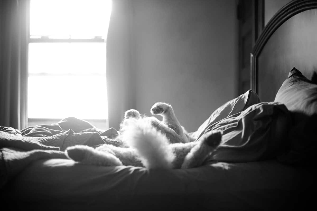 Goldendoodle-Macy-dog-black-and-white-fine-art-photography-by-Studio-L-photographer-Laura-Schneider-_4249