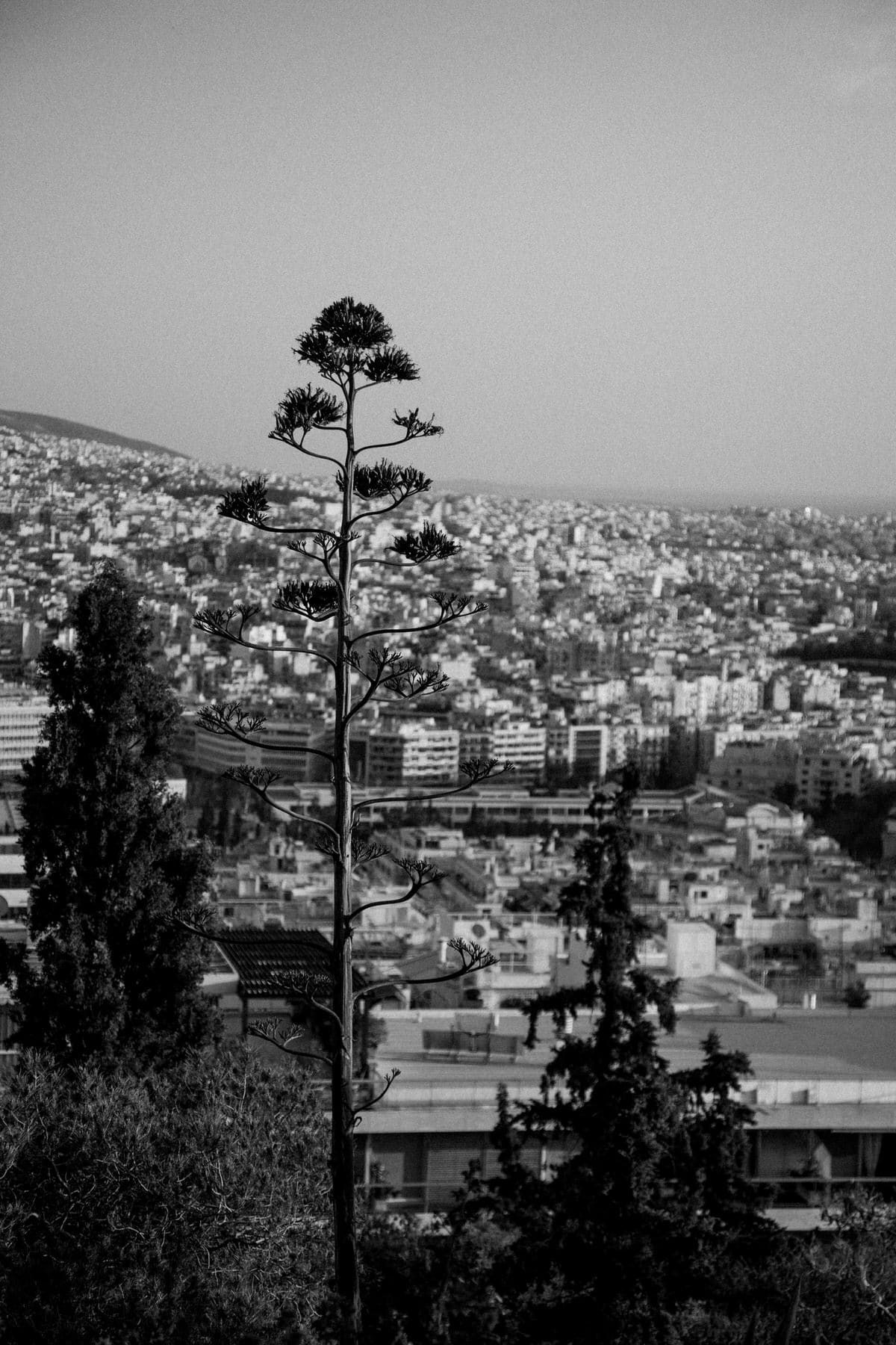 Athens-Greece-black-and-white-fine-art-photography-by-Studio-L-photographer-Laura-Schneider-_1812