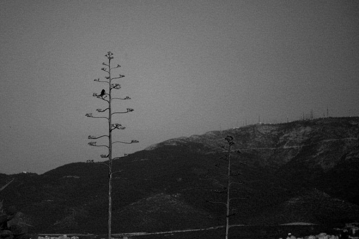 Athens-Greece-black-and-white-fine-art-photography-by-Studio-L-photographer-Laura-Schneider-_1816