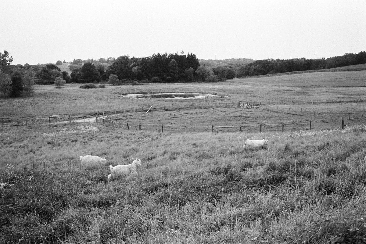 Cristo-Rey-Ranch-Wisconsin-black-and-white-fine-art-photography-by-Studio-L-photographer-Laura-Schneider-_0029