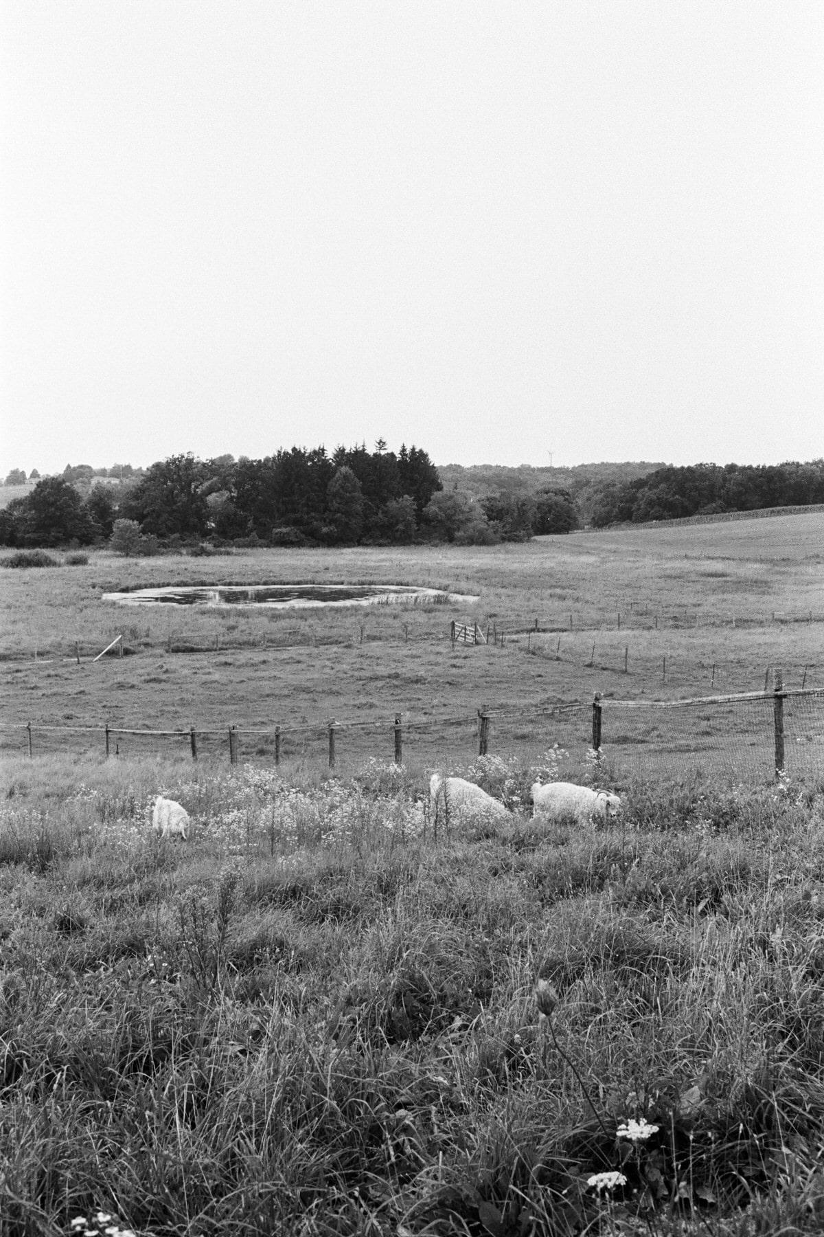 Cristo-Rey-Ranch-Wisconsin-black-and-white-fine-art-photography-by-Studio-L-photographer-Laura-Schneider-_0031