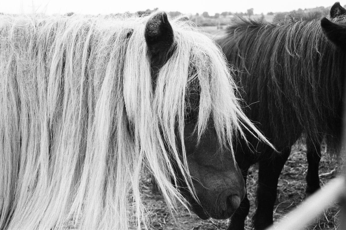 Cristo-Rey-Ranch-Wisconsin-black-and-white-fine-art-photography-by-Studio-L-photographer-Laura-Schneider-_0033
