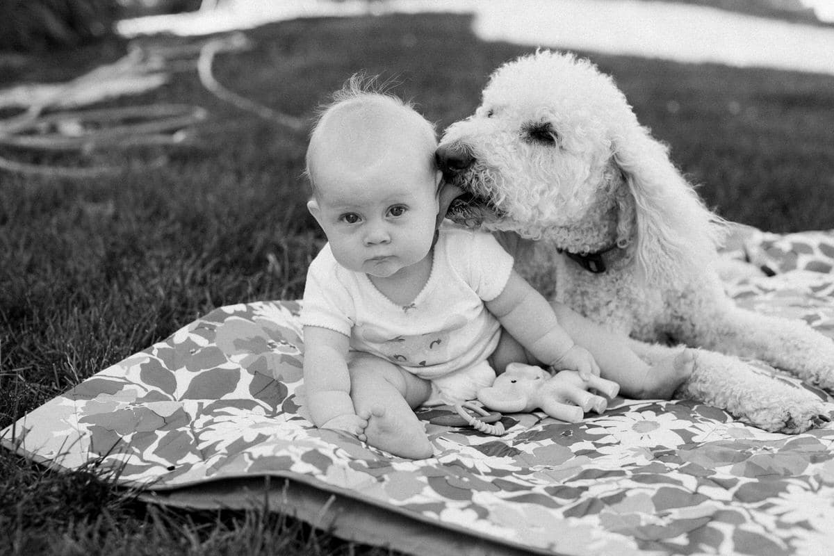 Goldendoodle-Macy-dog-black-and-white-fine-art-photography-by-Studio-L-photographer-Laura-Schneider-_6869