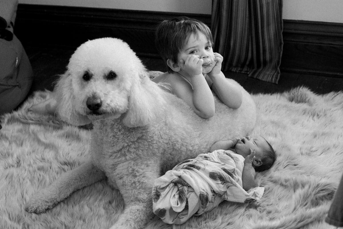 Goldendoodle-Macy-dog-black-and-white-fine-art-photography-by-Studio-L-photographer-Laura-Schneider-_6875