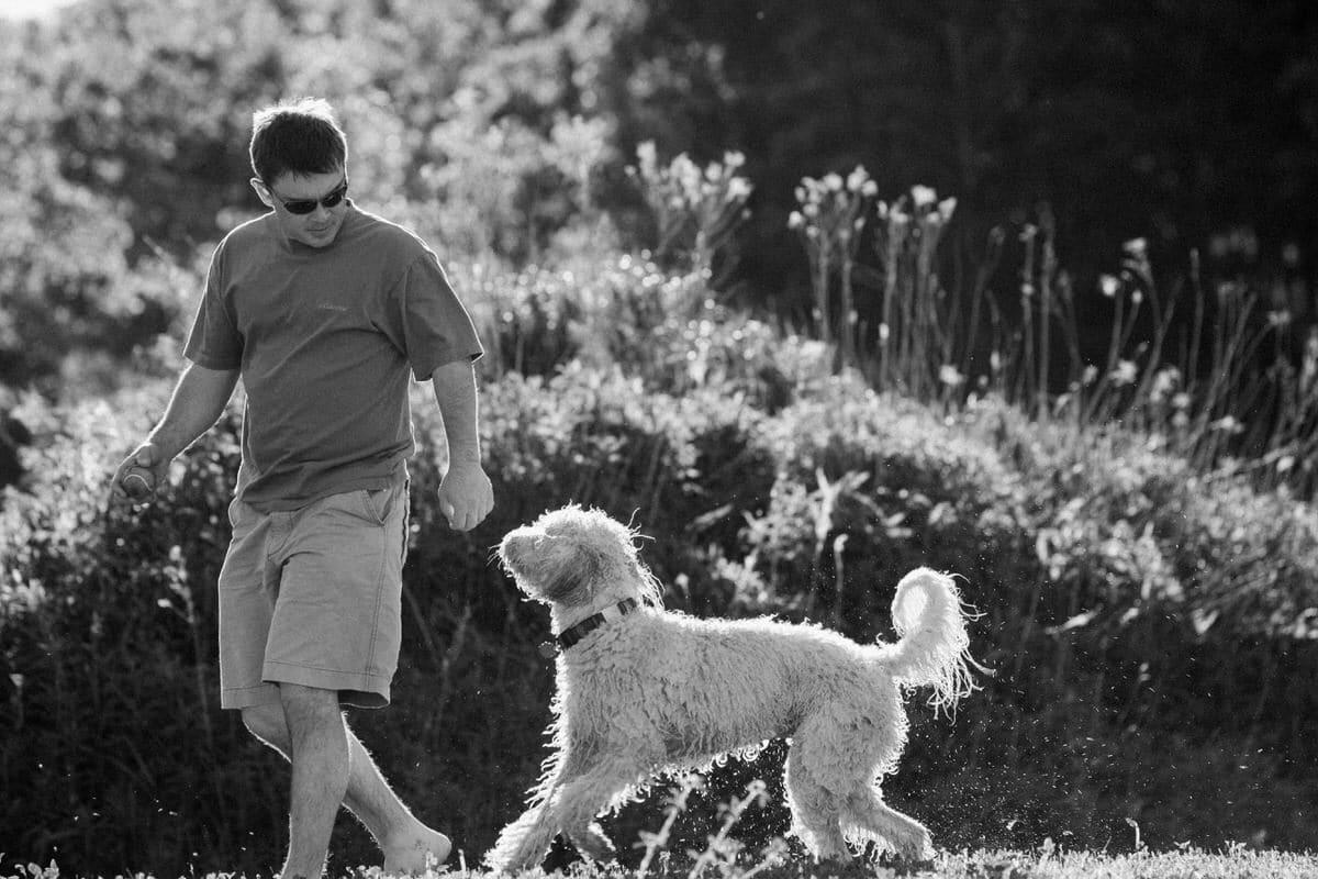 Goldendoodle-Macy-dog-fine-art-photography-by-Studio-L-photographer-Laura-Schneider-_8267