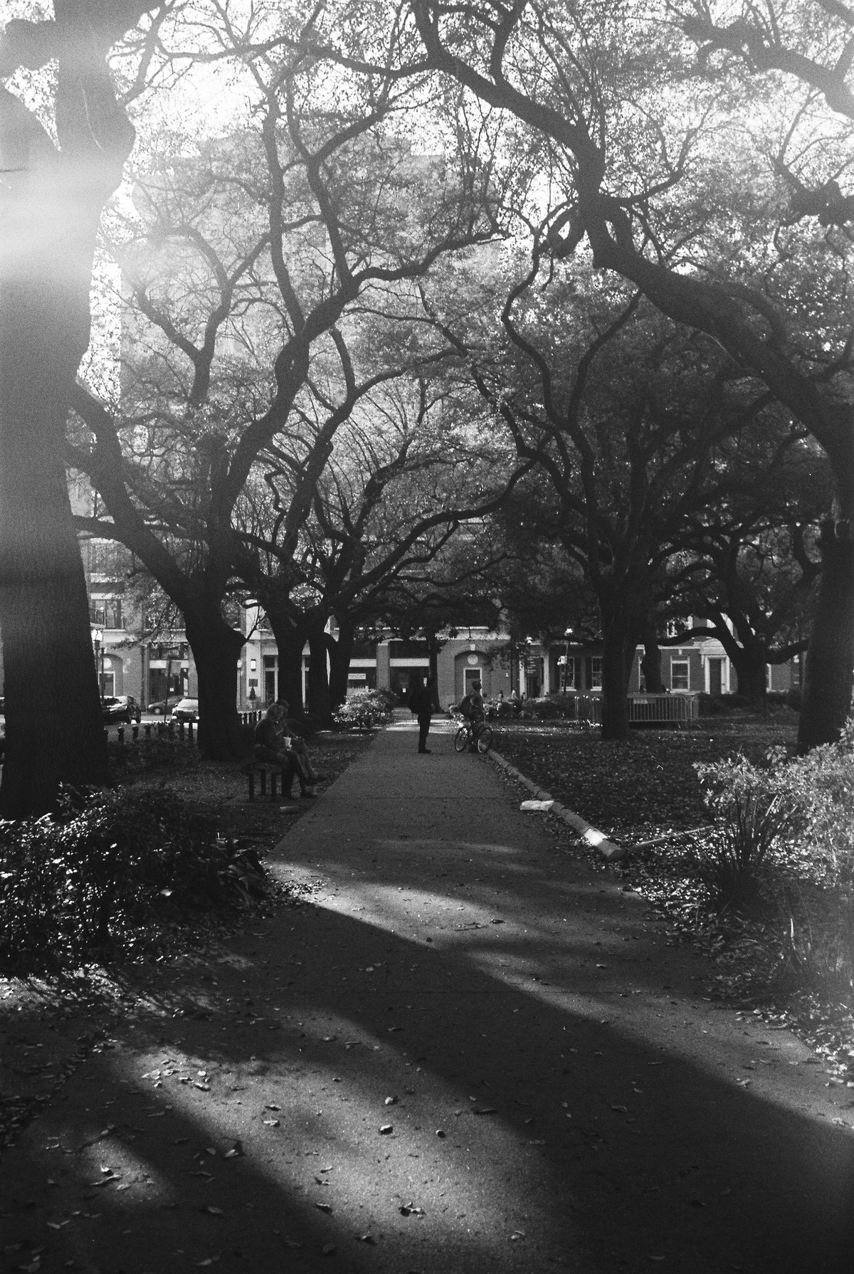 New-Orleans-Louisiana-black-and-white-fine-art-photography-by-Studio-L-photographer-Laura-Schneider-_017005