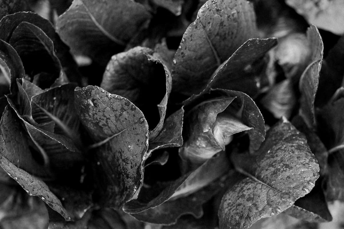 Organic-garden-Canoe-Bay-Chetek-Wisconsin-black-and-white-fine-art-photography-by-Studio-L-photographer-Laura-Schneider-_6784