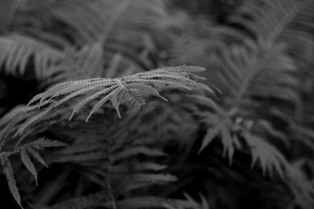 Organic-garden-Canoe-Bay-Chetek-Wisconsin-black-and-white-fine-art-photography-by-Studio-L-photographer-Laura-Schneider-_6795