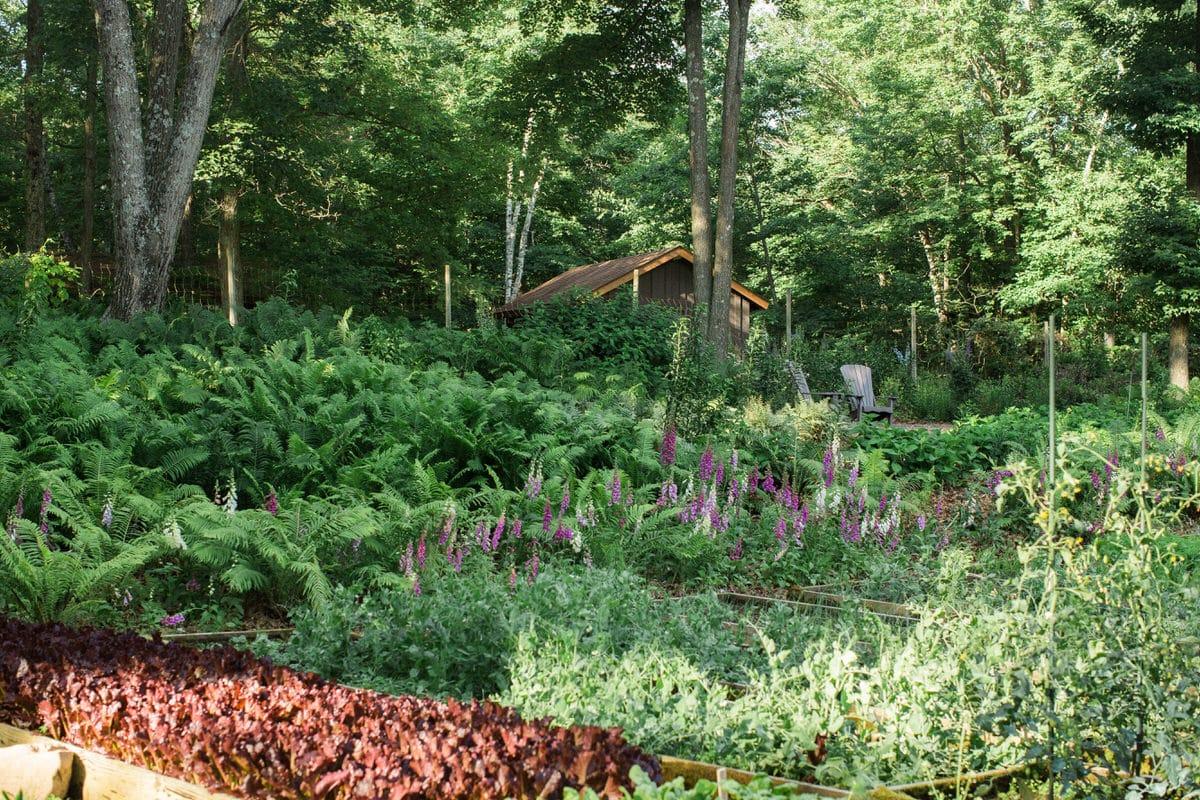 Organic-garden-Canoe-Bay-Chetek-Wisconsin-fine-art-photography-by-Studio-L-photographer-Laura-Schneider-_6802