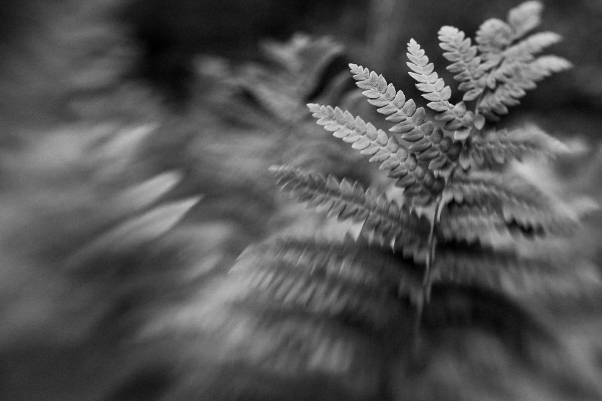 Acadia-National-Park-Maine-black-and-white-fine-art-photography-by-Studio-L-photographer-Laura-Schneider-_5660