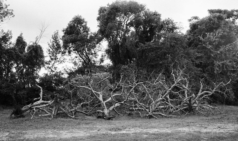 Little-Farmer-Apple-Orchard-Fond-du-Lac-Wisconsin-black-and-white-fine-art-film-photography-by-Studio-L-photographer-Laura-Schneider-_0023