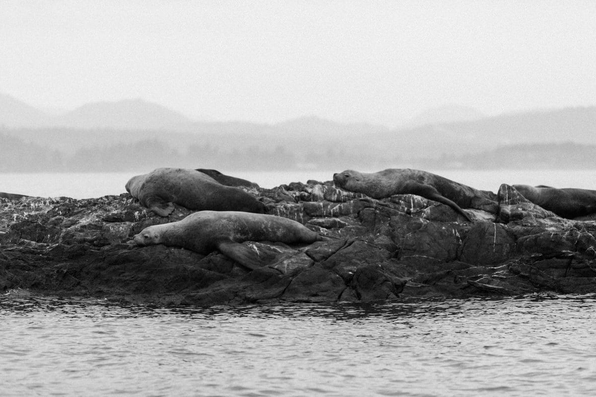 whale-watching-Victoria-British-Columbia-Canada-black-and-white-fine-art-photography-by-Studio-L-photographer-Laura-Schneider-_8792