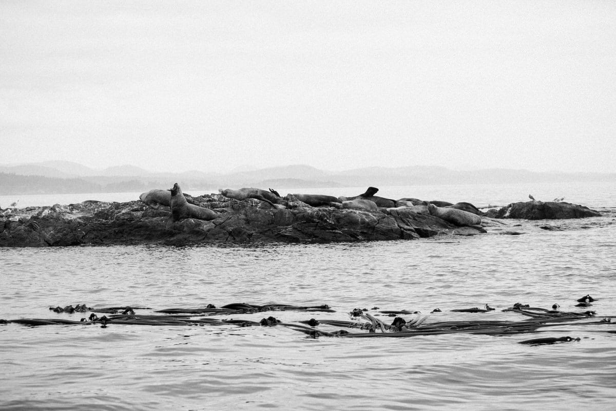 whale-watching-Victoria-British-Columbia-Canada-black-and-white-fine-art-photography-by-Studio-L-photographer-Laura-Schneider-_8795