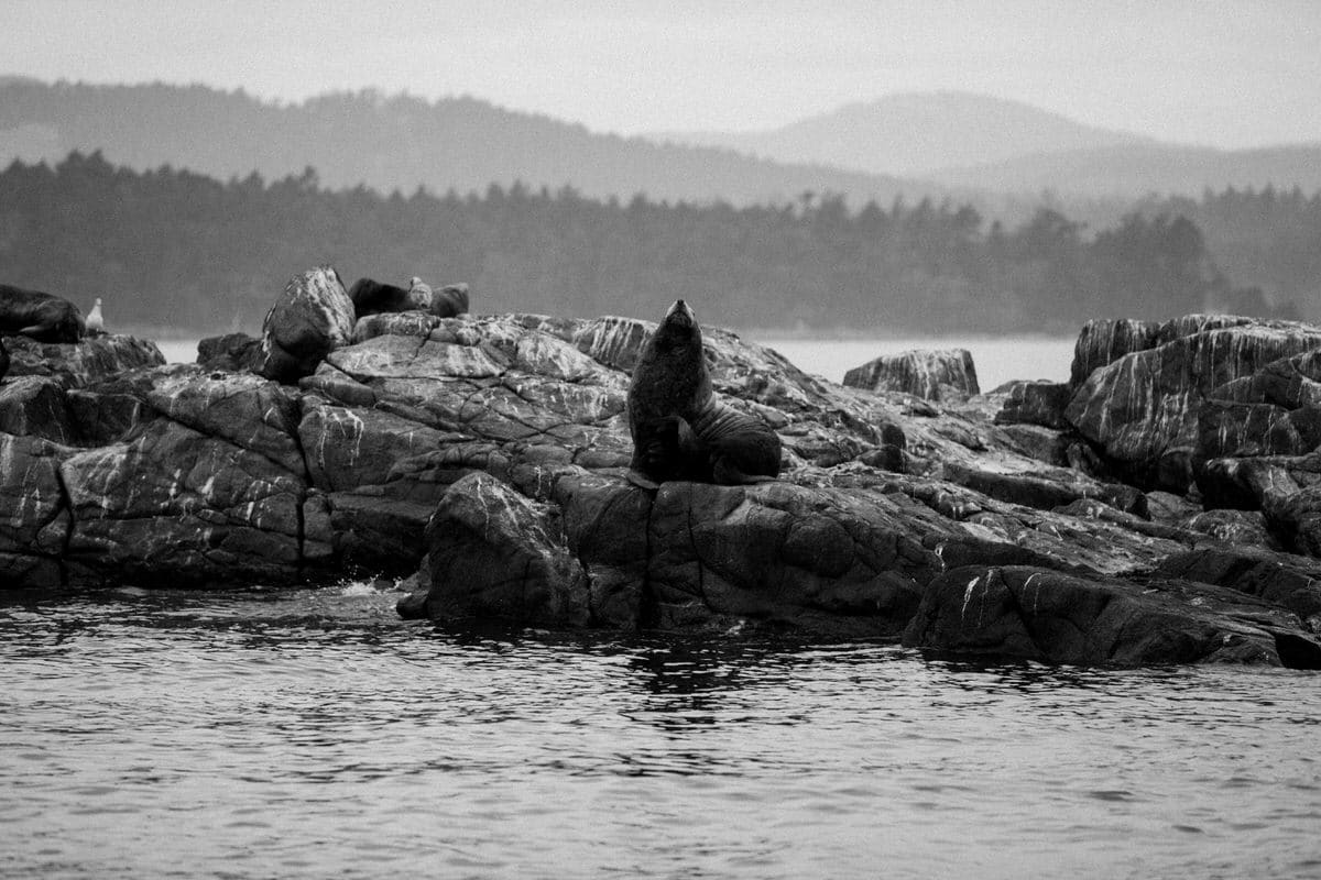 whale-watching-Victoria-British-Columbia-Canada-black-and-white-fine-art-photography-by-Studio-L-photographer-Laura-Schneider-_8798