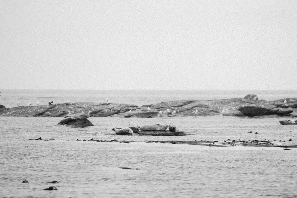 whale-watching-Victoria-British-Columbia-Canada-black-and-white-fine-art-photography-by-Studio-L-photographer-Laura-Schneider-_8816