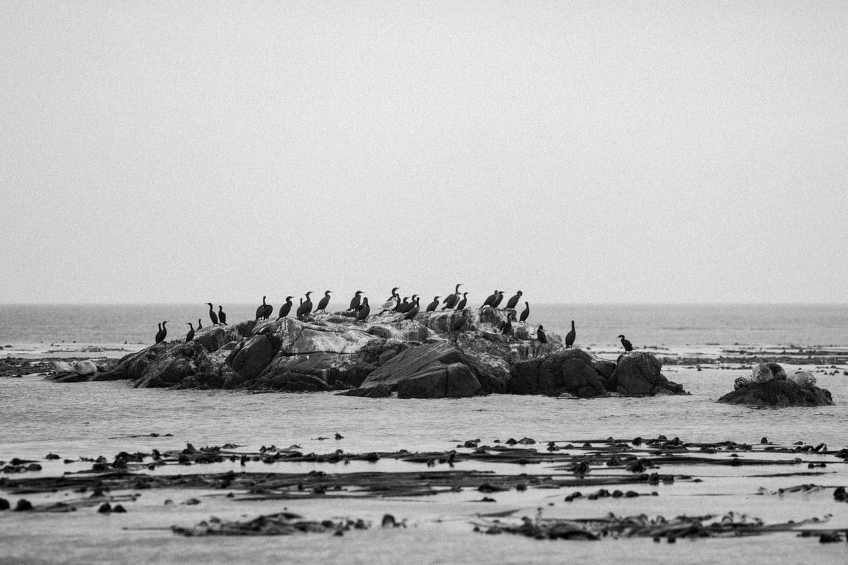 whale-watching-Victoria-British-Columbia-Canada-black-and-white-fine-art-photography-by-Studio-L-photographer-Laura-Schneider-_8819