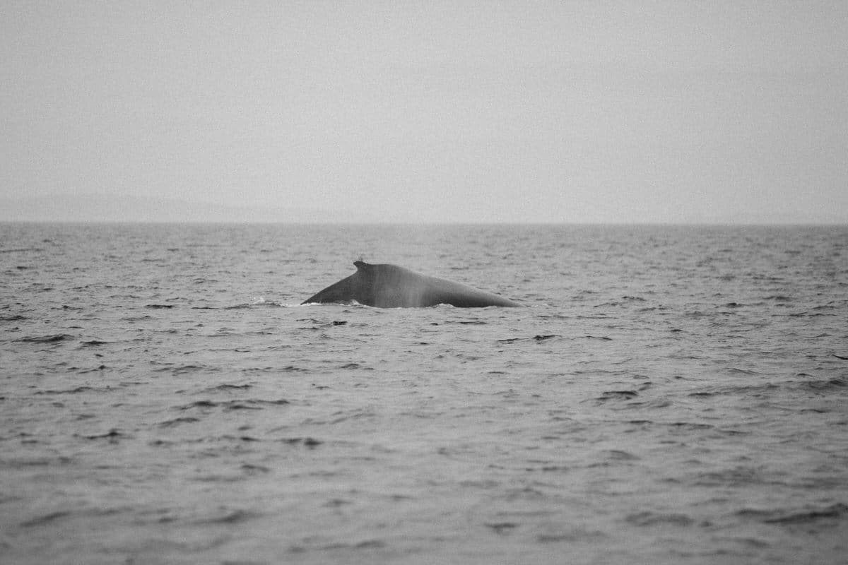 whale-watching-Victoria-British-Columbia-Canada-black-and-white-fine-art-photography-by-Studio-L-photographer-Laura-Schneider-_8842