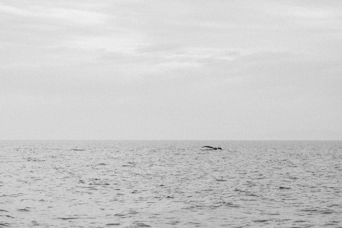 whale-watching-Victoria-British-Columbia-Canada-black-and-white-fine-art-photography-by-Studio-L-photographer-Laura-Schneider-_8844
