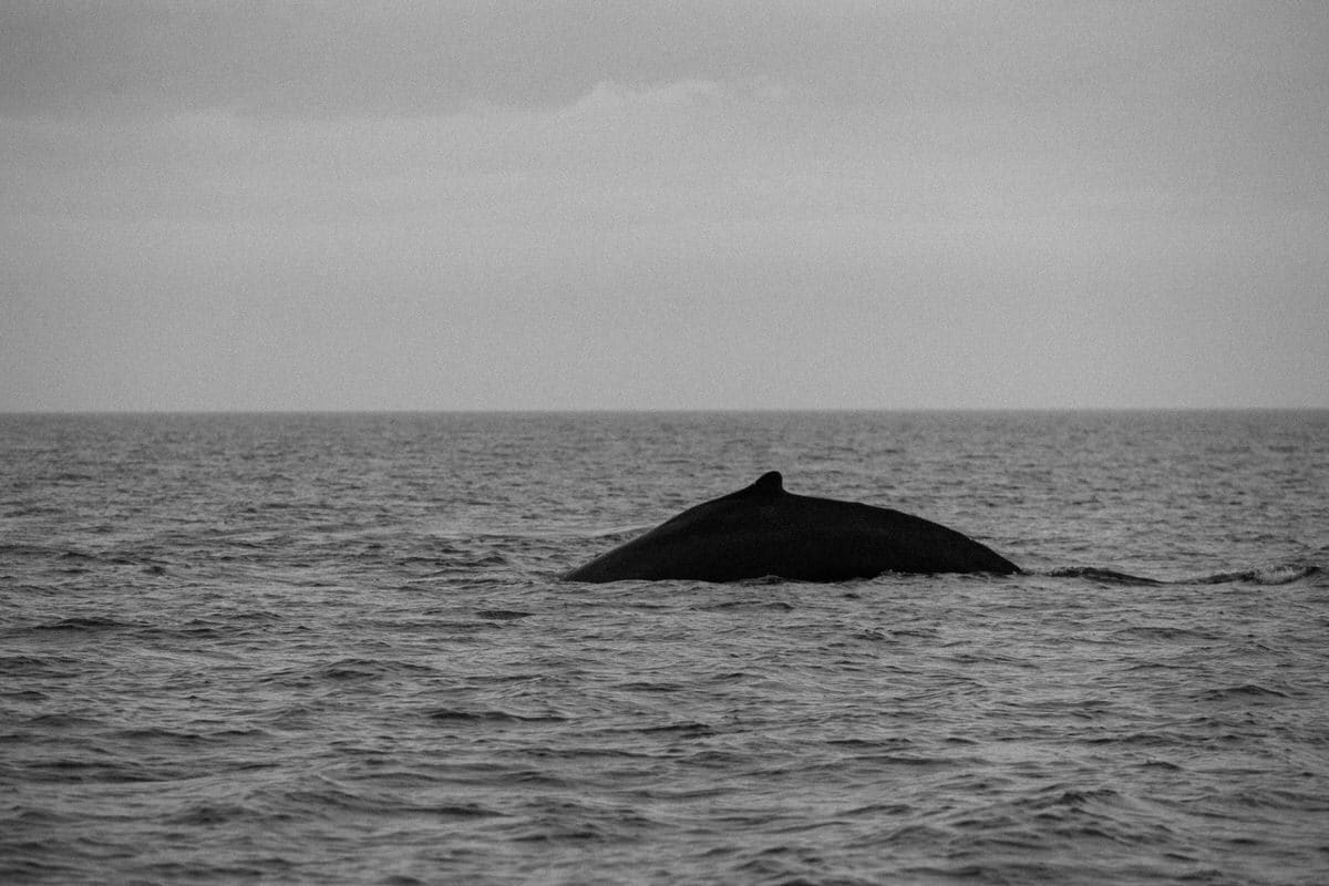 whale-watching-Victoria-British-Columbia-Canada-black-and-white-fine-art-photography-by-Studio-L-photographer-Laura-Schneider-_8868