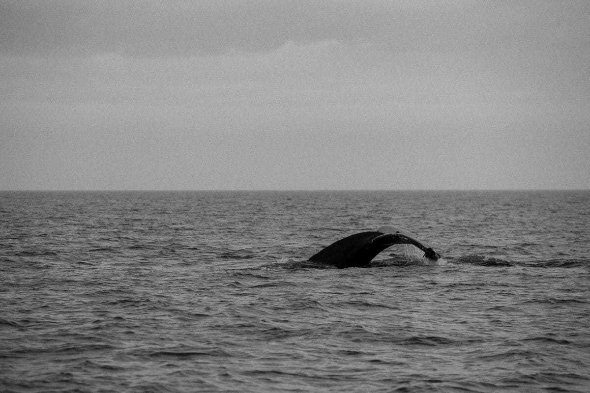 whale-watching-Victoria-British-Columbia-Canada-black-and-white-fine-art-photography-by-Studio-L-photographer-Laura-Schneider-_8869