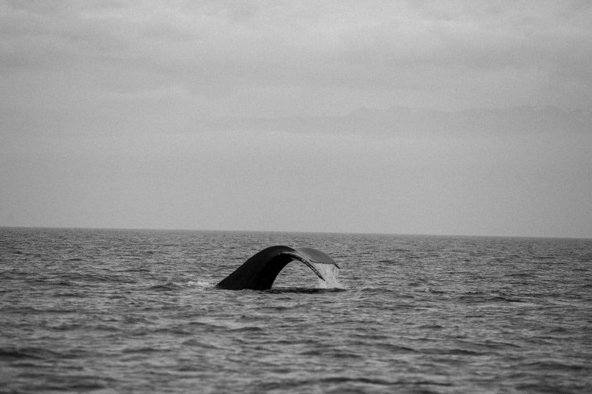 whale-watching-Victoria-British-Columbia-Canada-black-and-white-fine-art-photography-by-Studio-L-photographer-Laura-Schneider-_8876