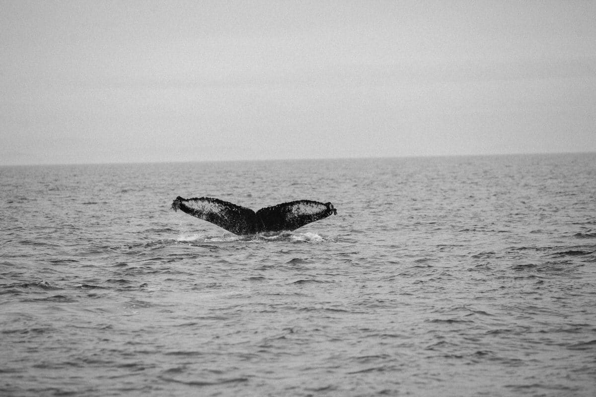 whale-watching-Victoria-British-Columbia-Canada-black-and-white-fine-art-photography-by-Studio-L-photographer-Laura-Schneider-_8885