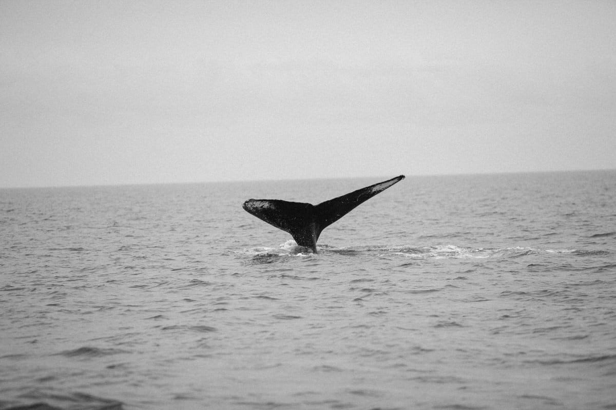 whale-watching-Victoria-British-Columbia-Canada-black-and-white-fine-art-photography-by-Studio-L-photographer-Laura-Schneider-_8899