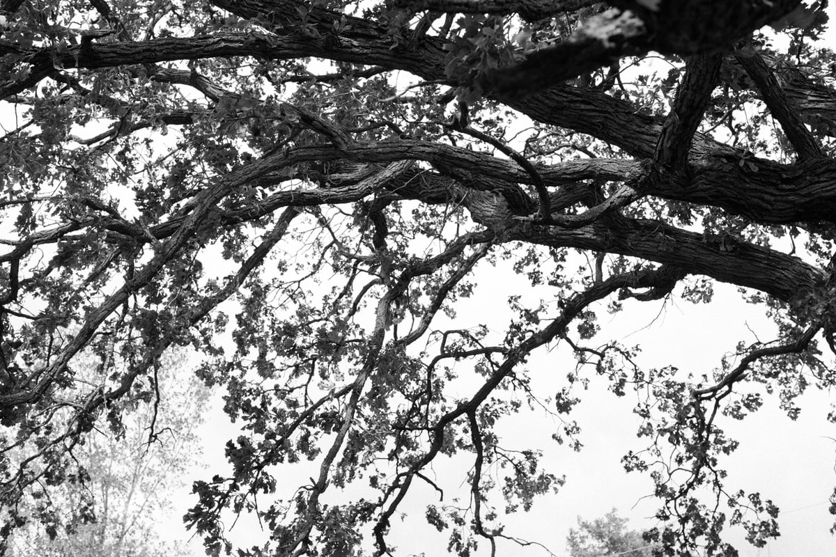 Oak-Tree-Fond-du-Lac-Wisconsin-black-and-white-fine-art-photography-by-Studio-L-photographer-Laura-Schneider-_12053