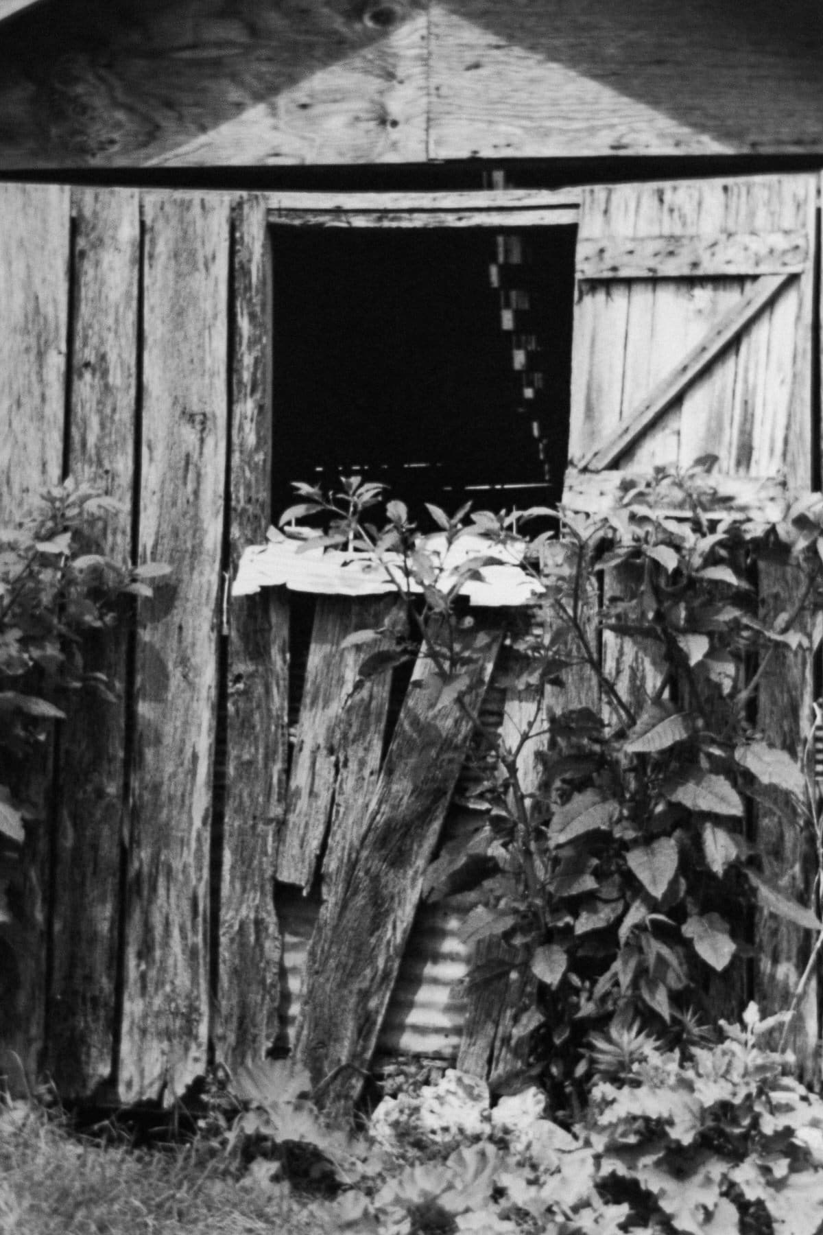 Tennessee-black-and-white-fine-art-film-photography-by-Studio-L-photographer-Laura-Schneider-_ 2440