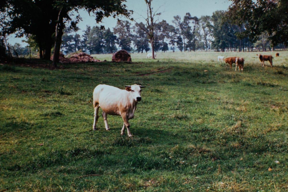 Tennessee-fine-art-film-photography-by-Studio-L-photographer-Laura-Schneider-_ 2444