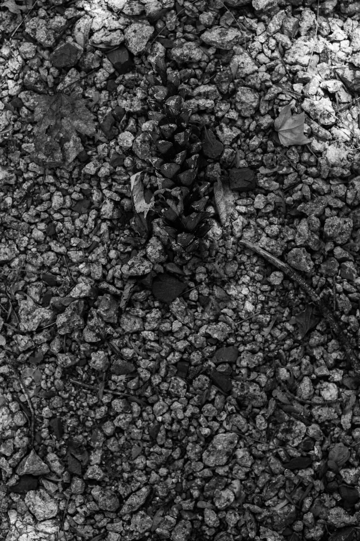 mini-golf-Crivitz-Wisconsin-black-and-white-fine-art-photography-by-Studio-L-photographer-Laura-Schneider-_9668
