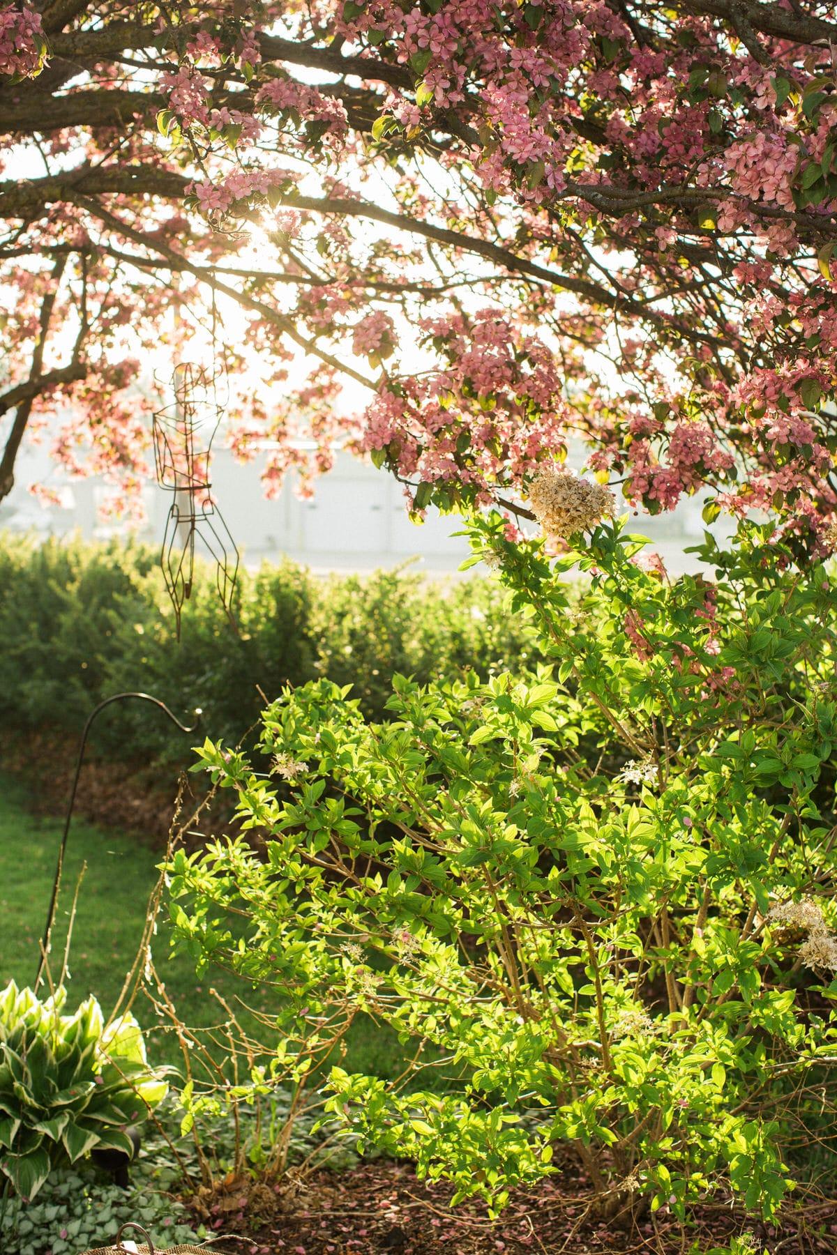 spring-bloom-Wisconsin-fine-art-photography-by-Studio-L-photographer-Laura-Schneider-_5570