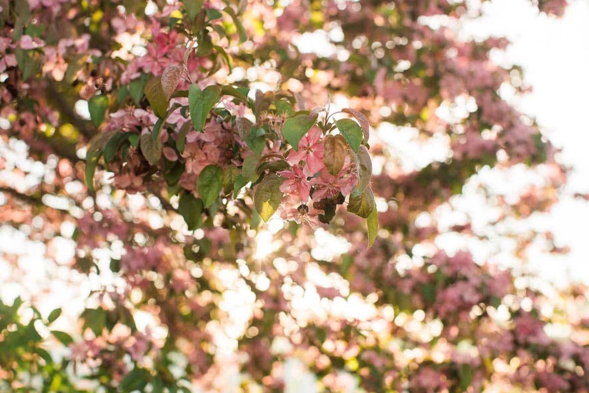 spring-bloom-Wisconsin-fine-art-photography-by-Studio-L-photographer-Laura-Schneider-_5573
