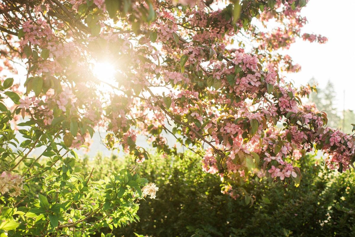 spring-bloom-Wisconsin-fine-art-photography-by-Studio-L-photographer-Laura-Schneider-_5575