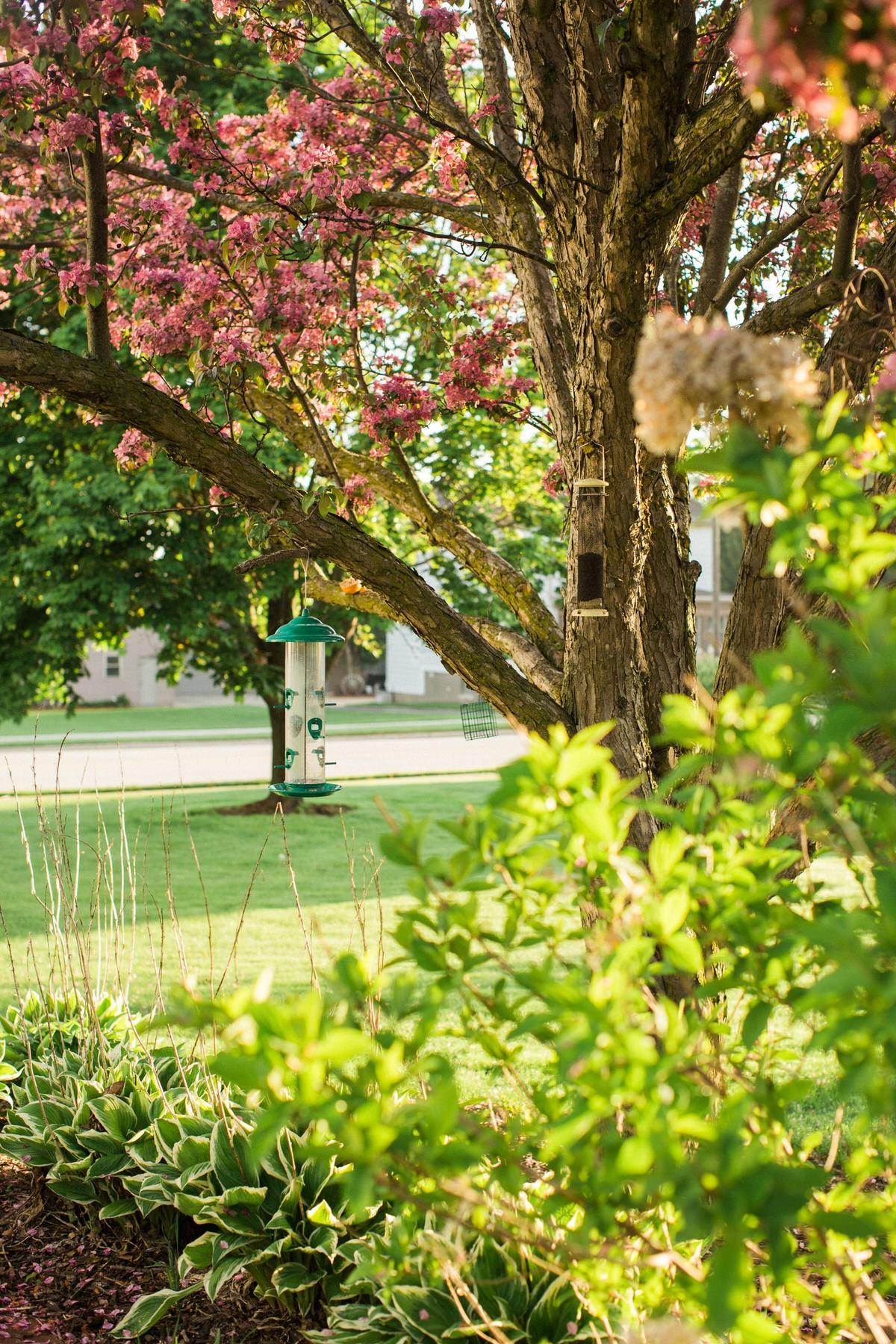 spring-bloom-Wisconsin-fine-art-photography-by-Studio-L-photographer-Laura-Schneider-_5578