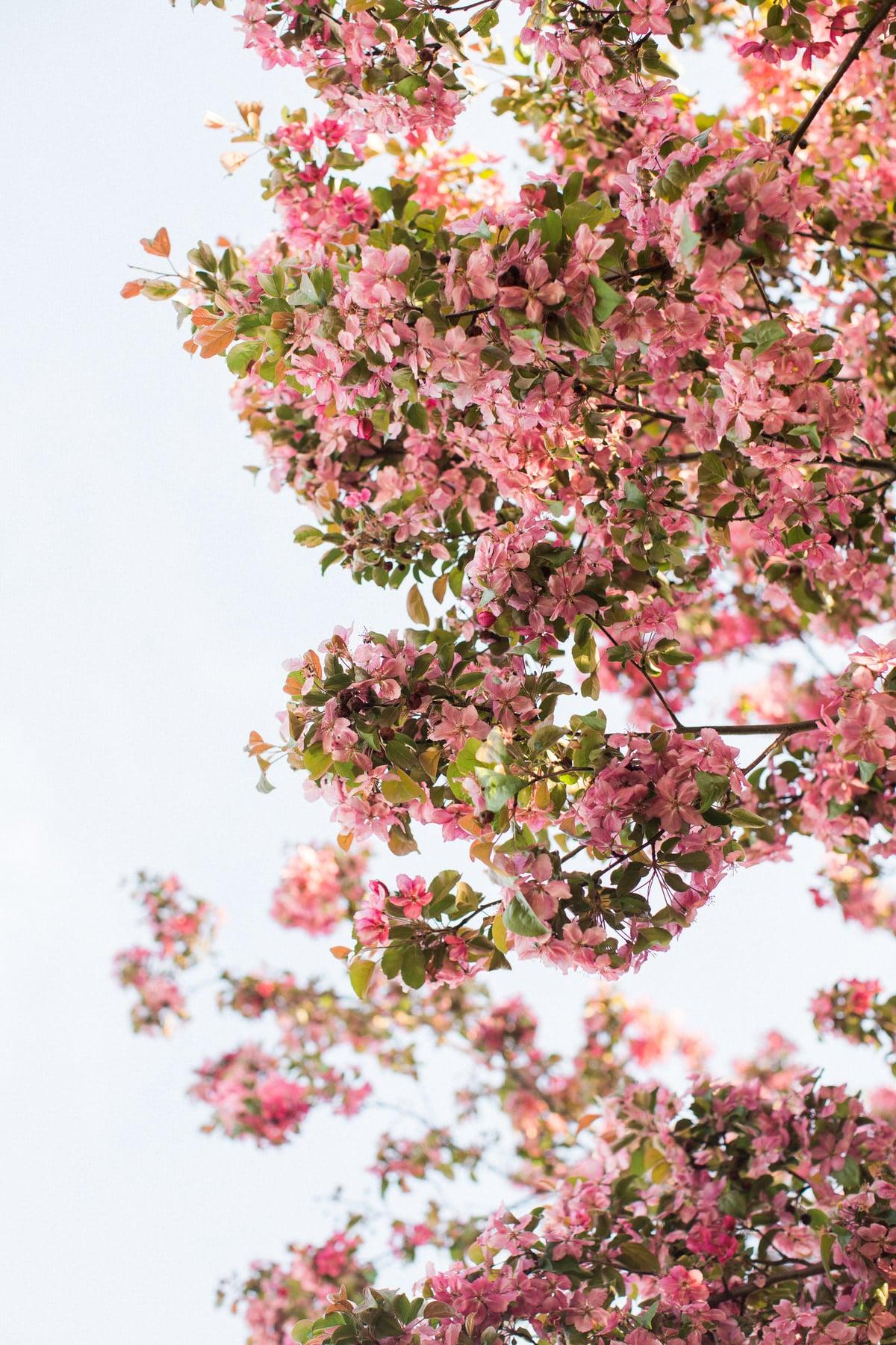 spring-bloom-Wisconsin-fine-art-photography-by-Studio-L-photographer-Laura-Schneider-_5583