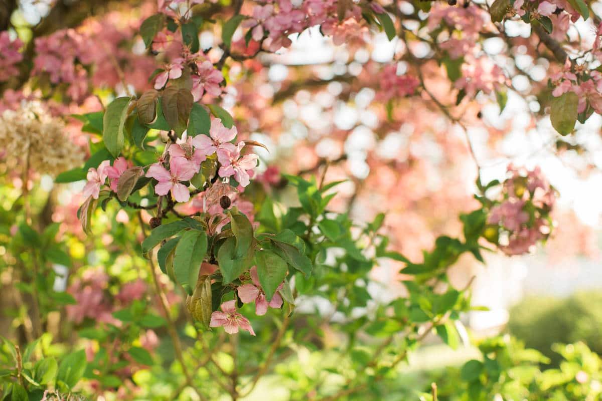 spring-bloom-Wisconsin-fine-art-photography-by-Studio-L-photographer-Laura-Schneider-_5584