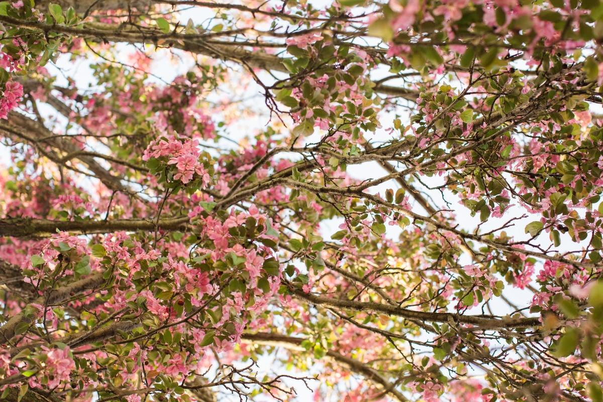 spring-bloom-Wisconsin-fine-art-photography-by-Studio-L-photographer-Laura-Schneider-_5586