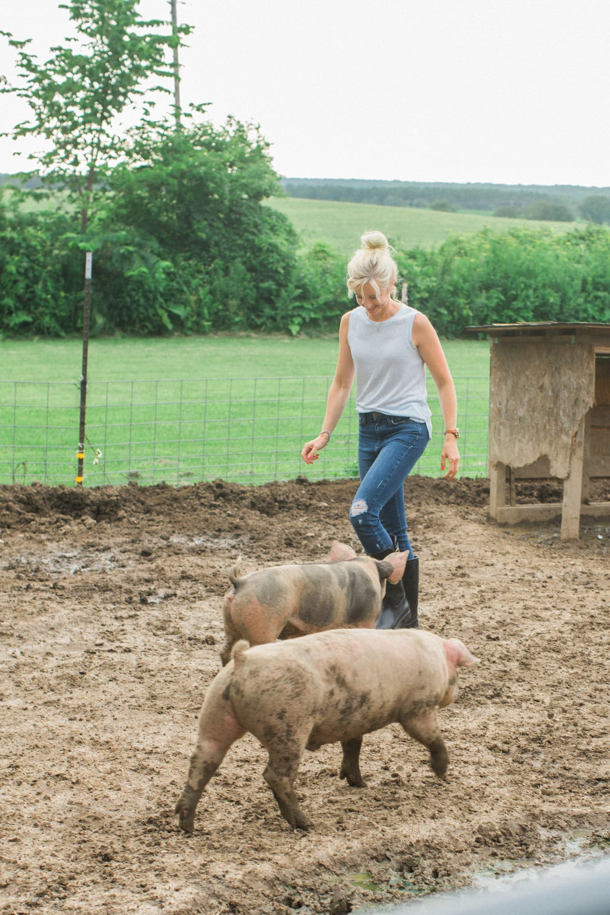 Humanely-raised-hogs-Wisconsin-farm-fine-art-photography-by-Studio-L-photographer-Laura-Schneider-_9286