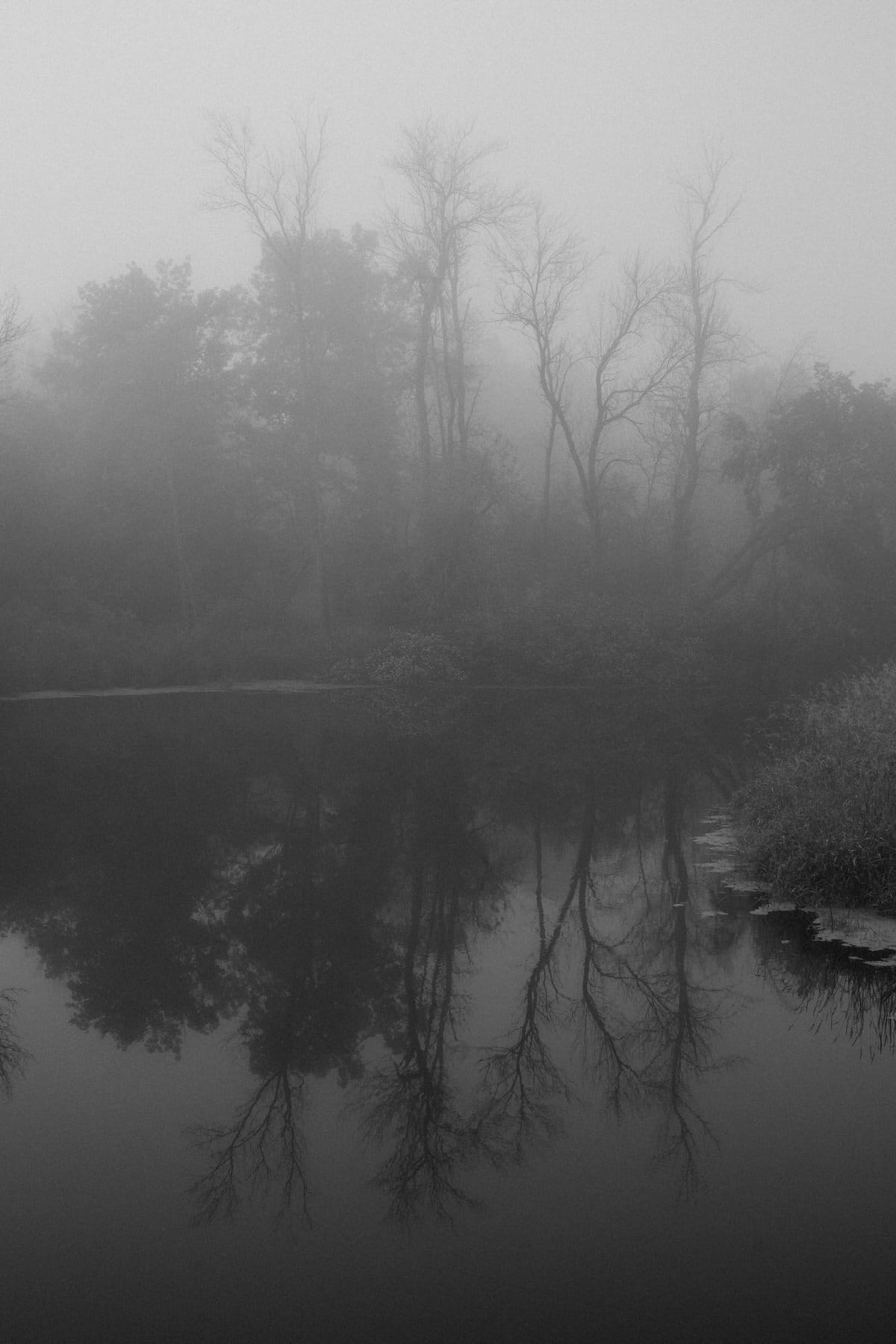 Wisconsin-fog-personal-project-black-and-white-fine-art-photography-by-Studio-L-photographer-Laura-Schneider-_9548