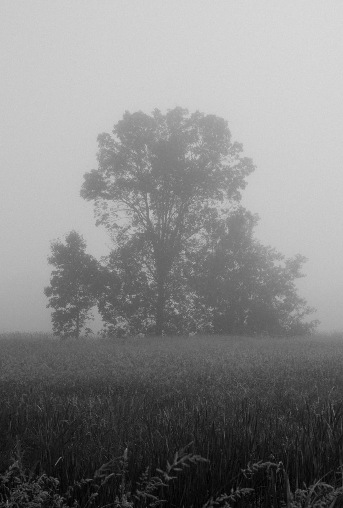 Wisconsin-fog-personal-project-black-and-white-fine-art-photography-by-Studio-L-photographer-Laura-Schneider-_9576