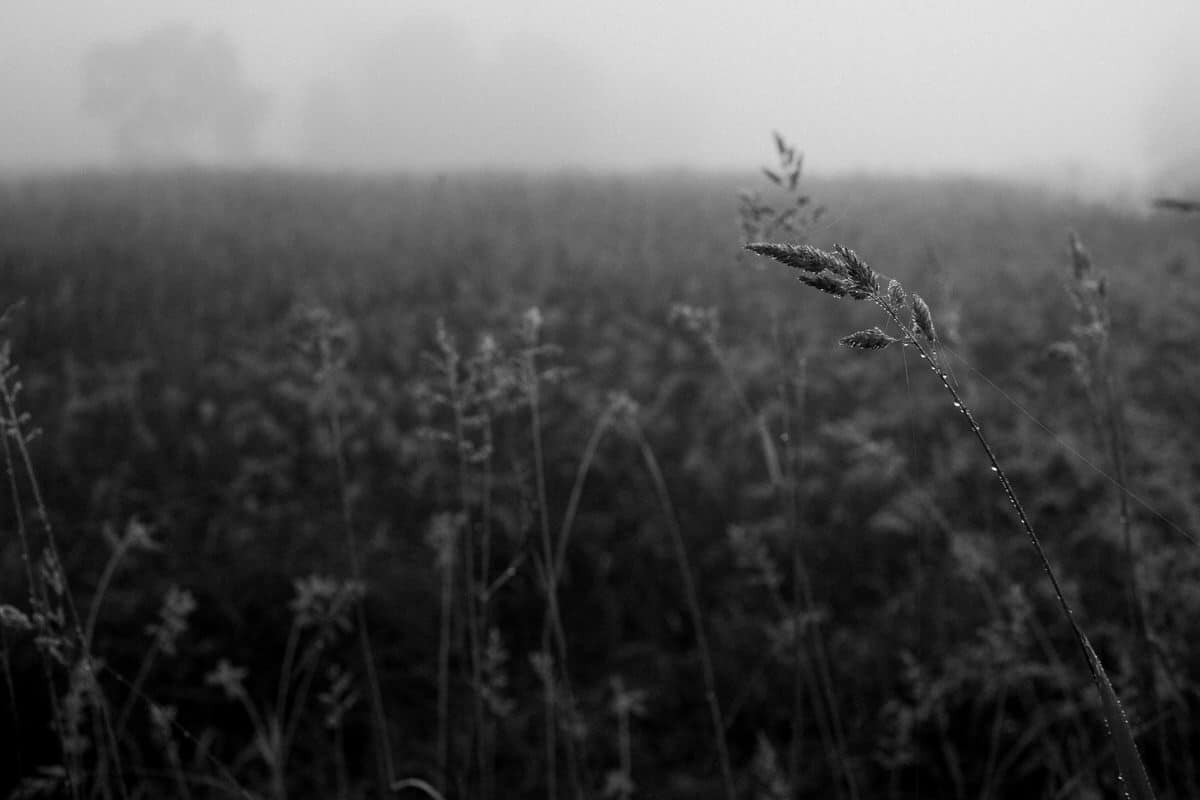 Wisconsin-fog-personal-project-black-and-white-fine-art-photography-by-Studio-L-photographer-Laura-Schneider-_9580