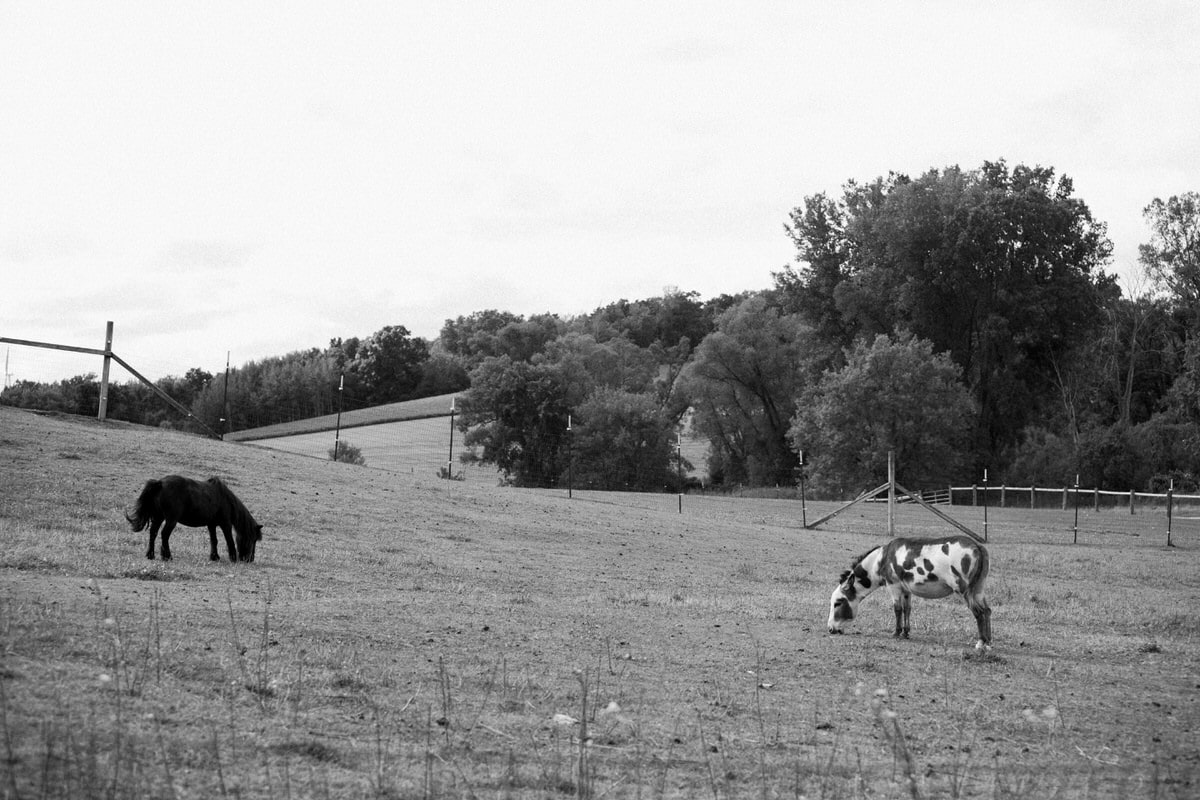 Cristo-Rey-Ranch-Wisconsin-black-and-white-fine-art-photography-by-Studio-L-photographer-Laura-Schneider-_1872