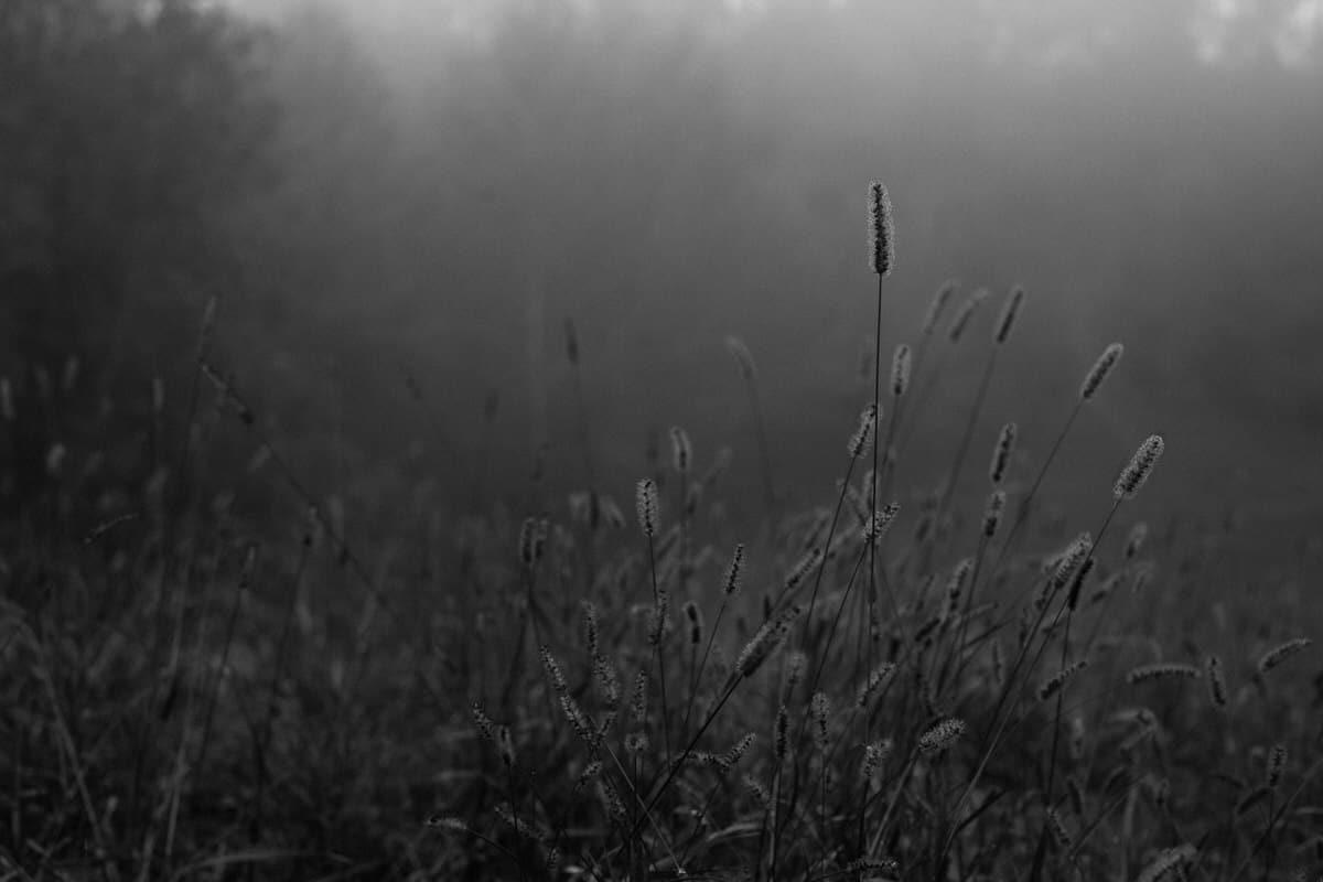 Kiekhaefer-Park-Fond-du-Lac-Wisconsin-black-and-white-fine-art-photography-by-Studio-L-photographer-Laura-Schneider-_3368