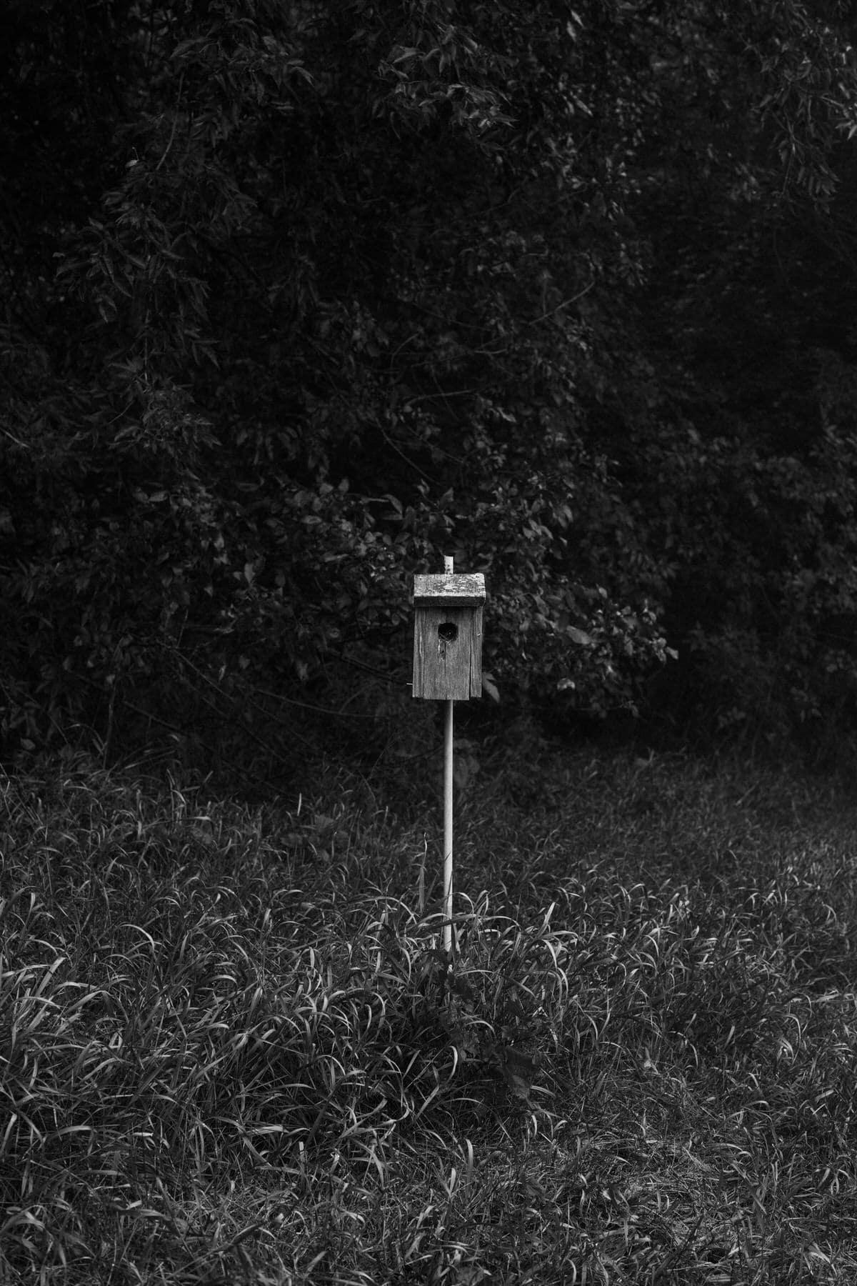Kiekhaefer-Park-Fond-du-Lac-Wisconsin-black-and-white-fine-art-photography-by-Studio-L-photographer-Laura-Schneider-_3388